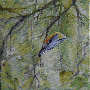 nuthatchTH